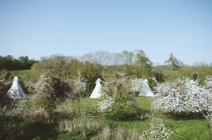 orchard with tipis
