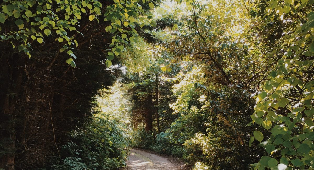 a country lane in ross on wye